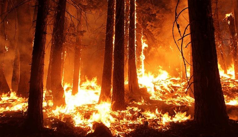 Camp Fire, incendio en California el más devastador de la historia